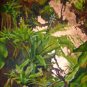 Mt. Scenery Bromelia, 48 x 40 inches, oil and gold leaf