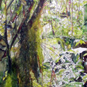 The Magical Mossy Forest 2; 90 x 120 cm, 3 x 4 feet, watercolor on canvas